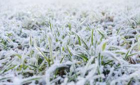 Jak zadbać o trawę po zimie?